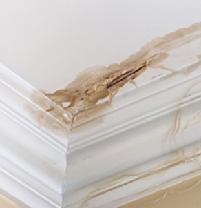 We can help with your Dash Point water damage
